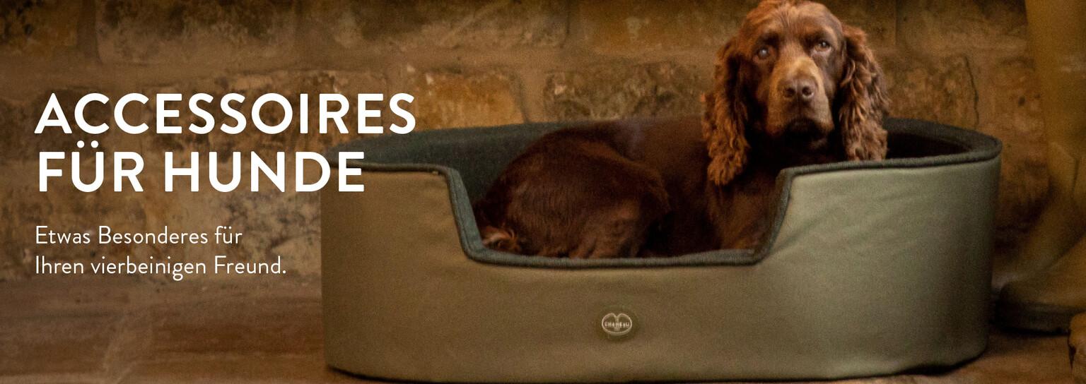 Accessoires für Hunde entdecken