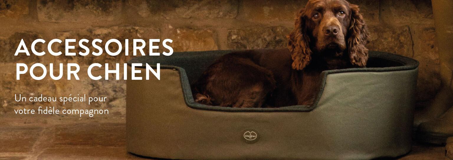 Découvrir les accessoires pour chien