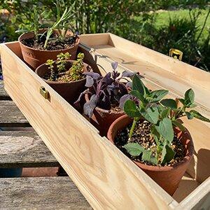 How to create a mini herb garden