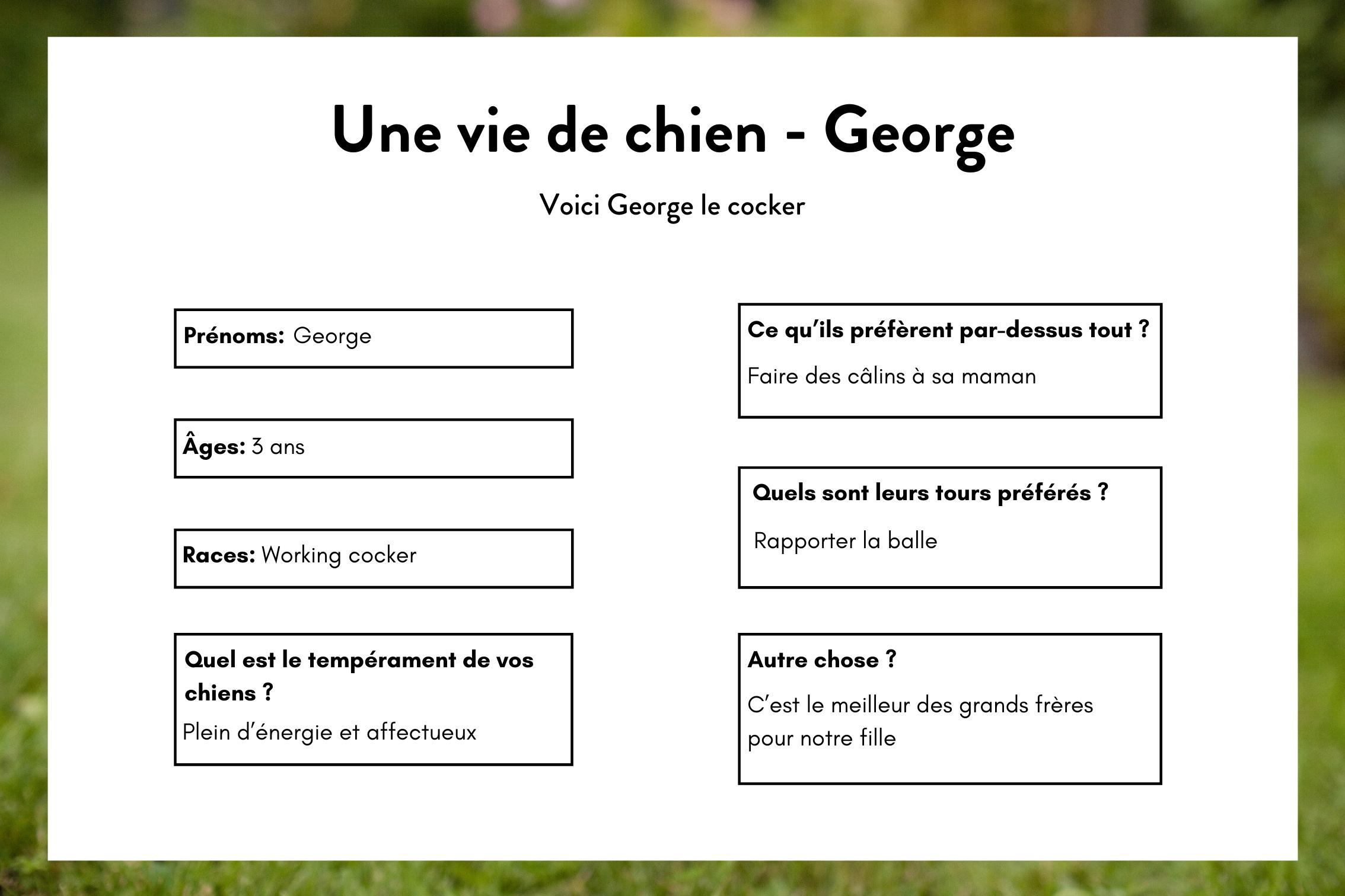 Une vie de chien - George 1