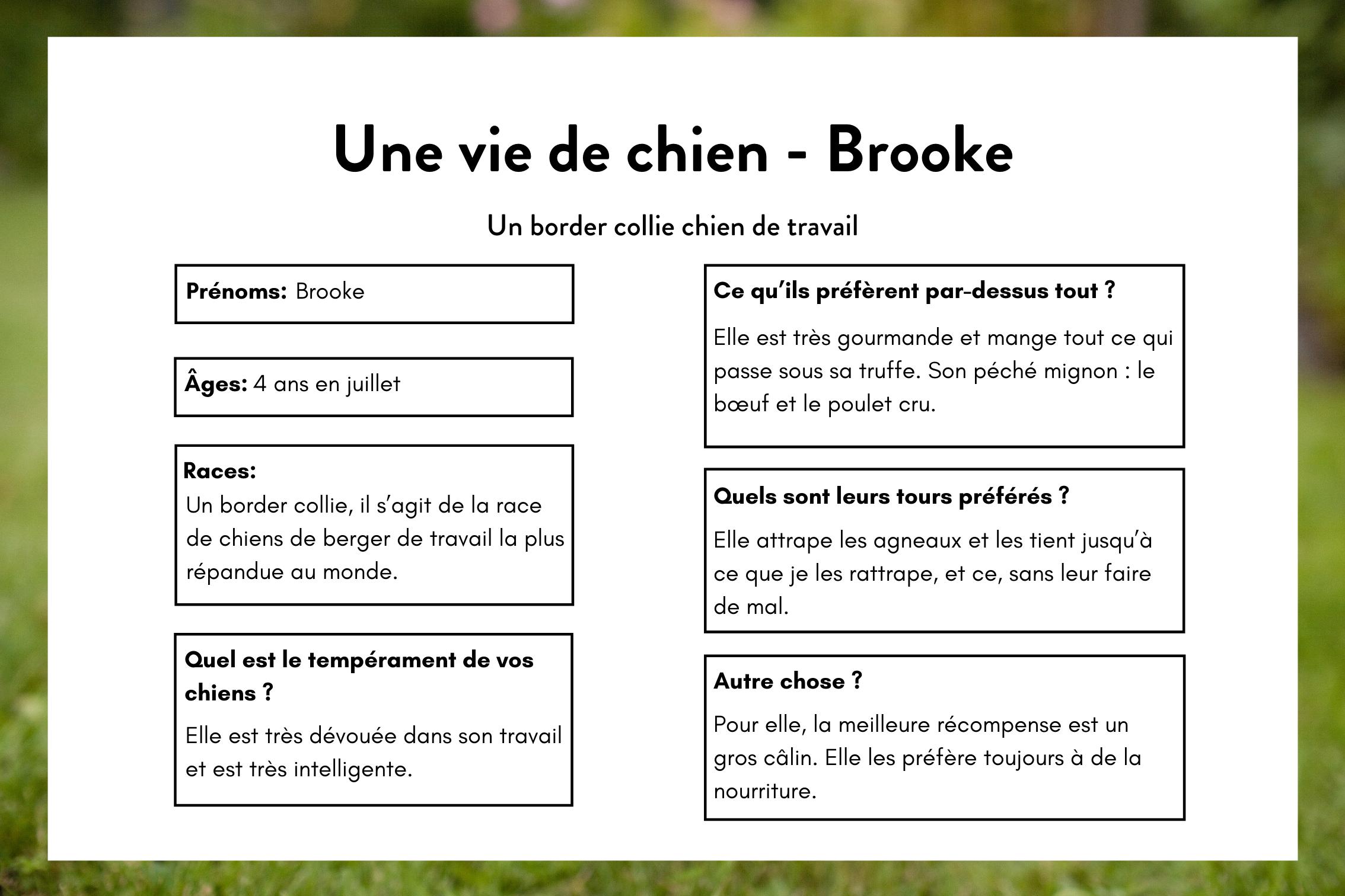 Une vie de chien - Brooke