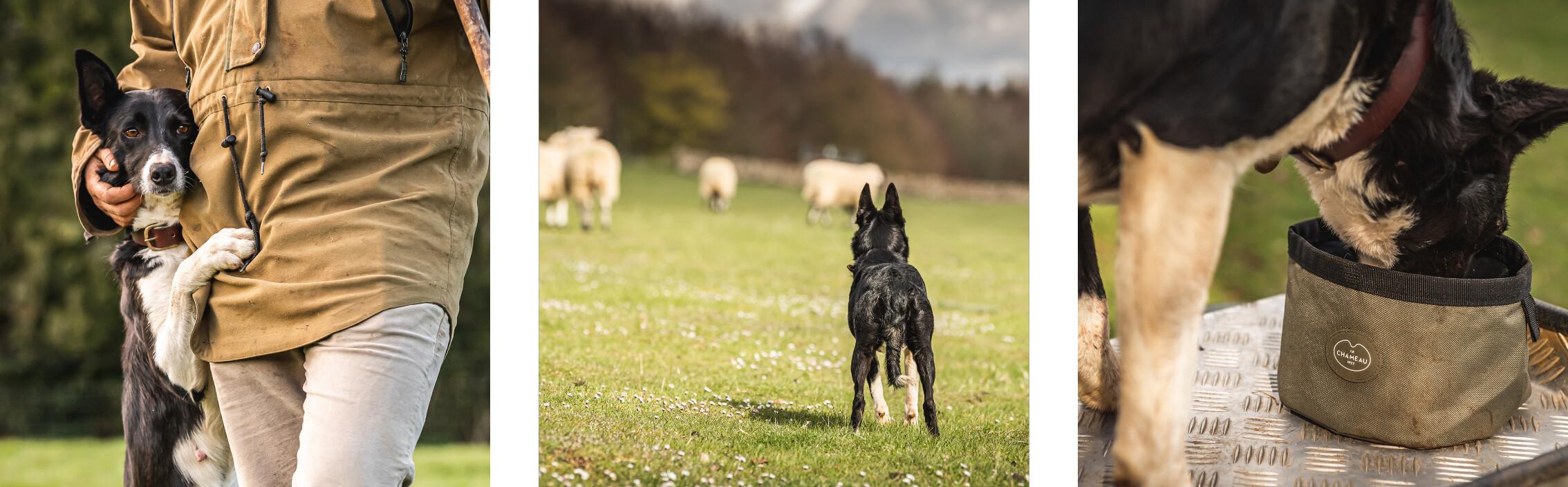 Une vie de chien - Brooke 2