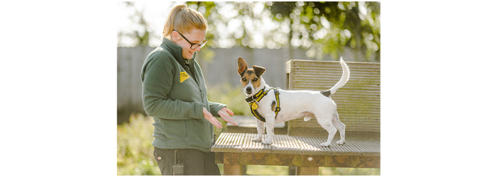Today Dogs Trust (formerly the NCDL) is the UK's largest dog welfare charity