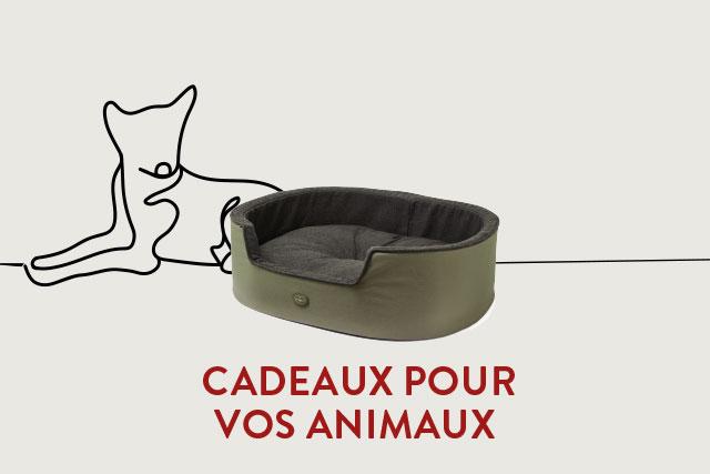 Accessoires pour chien