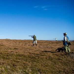 Prospects for the 2020 Grouse Season
