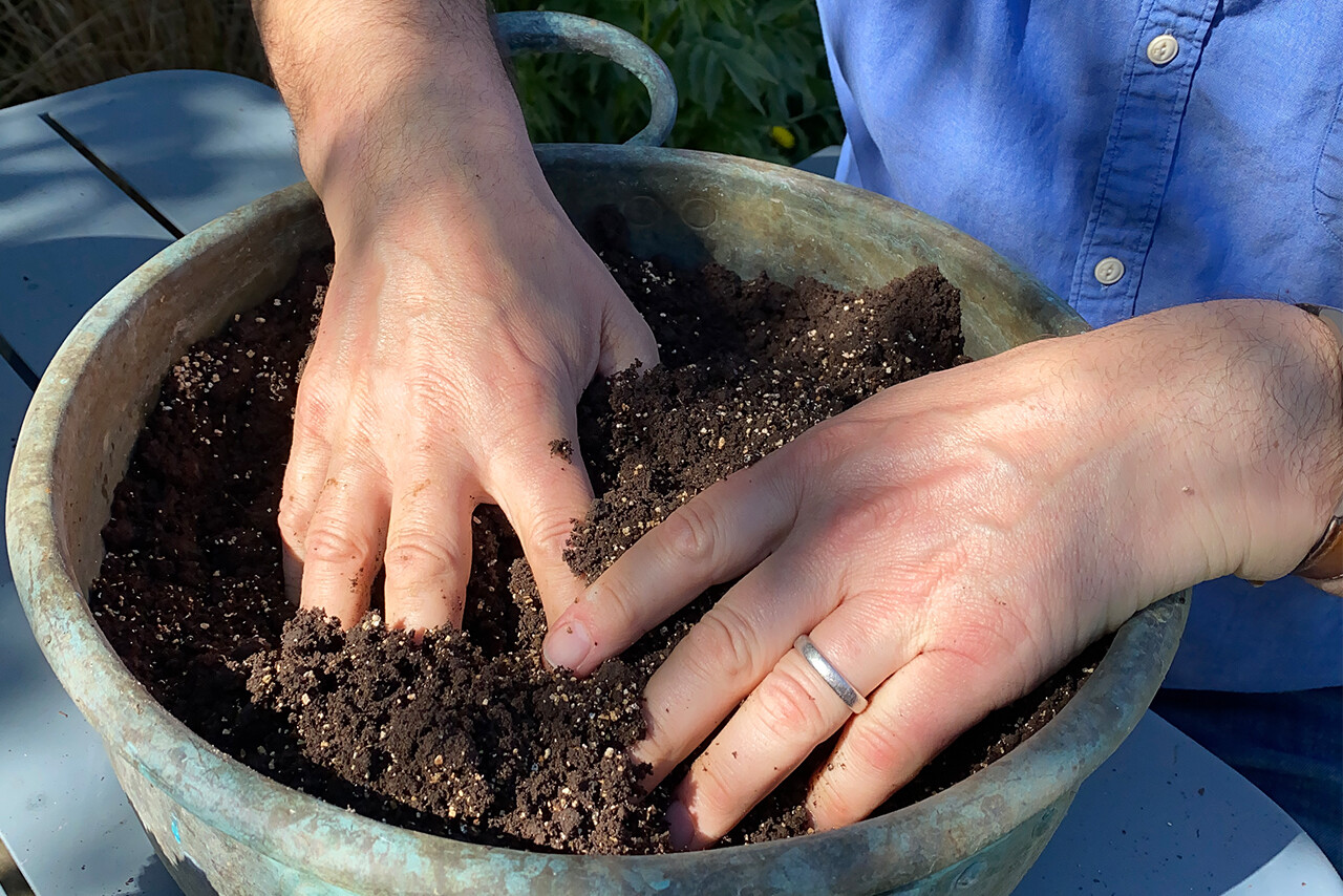 Fill the container with compost.