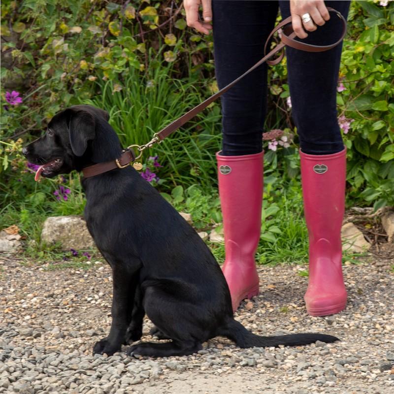 Dog Lead -