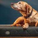 Lit pour chien rembourré